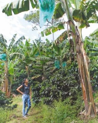 La nueva generación que cultiva el campo colombiano